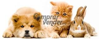 Royal Canin Maxi Adult Pienso Perros Barato