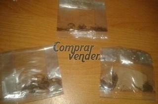 semillas de tabaco virginia natural